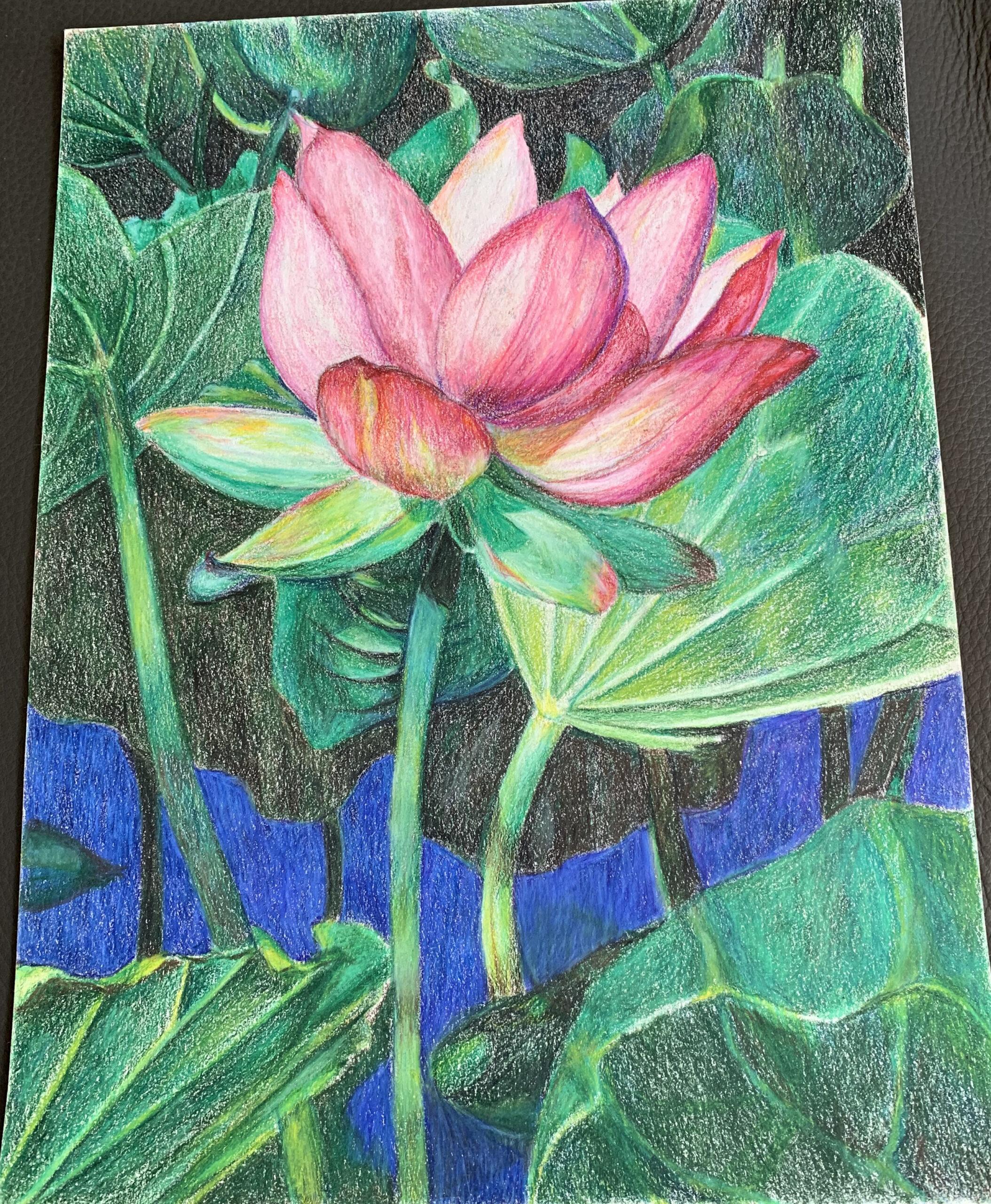 Lotus 1-2
